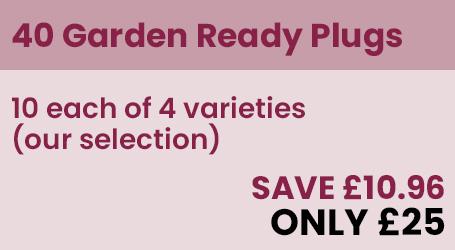 40 Garden ready Offer