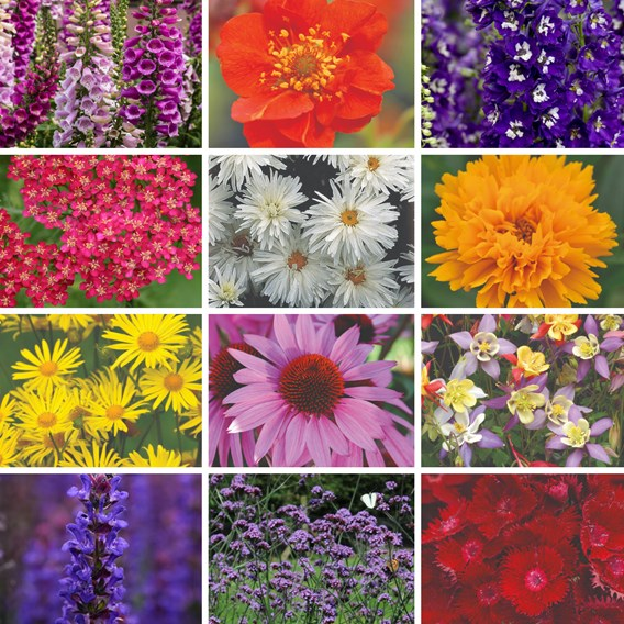 Best Value  Perennial Collection