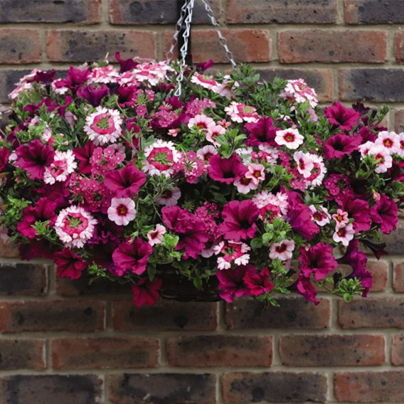 Eton Mess Pre-Planted Basket