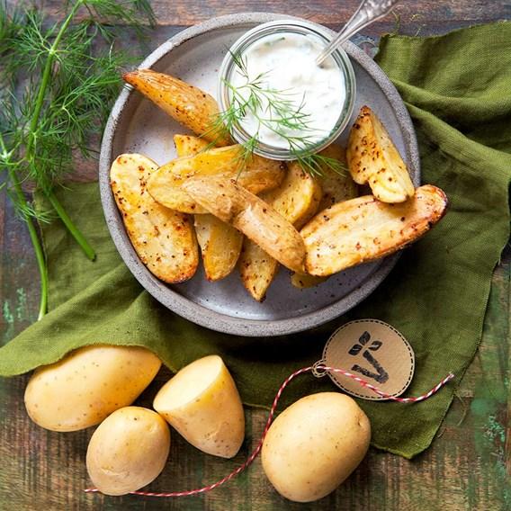 Potato Plants Adessa
