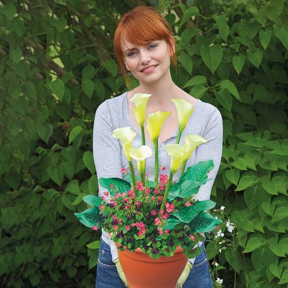 Plant-O-Mat - Calla/Oxalis