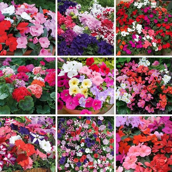Lucky Dip Annual Garden Favourites