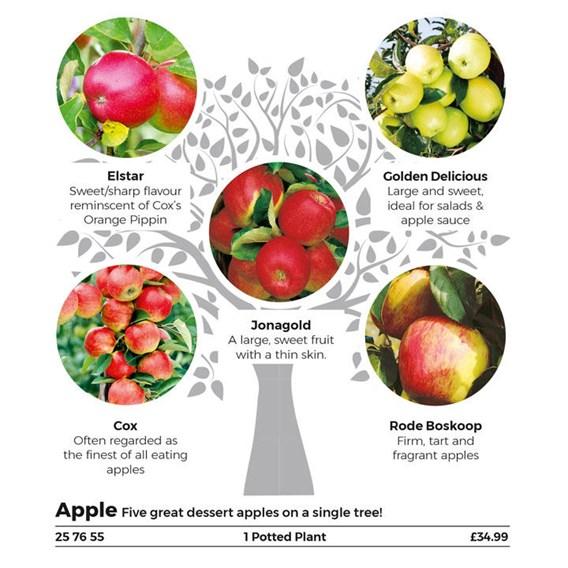 Gourmet Fruit Trees - Apple