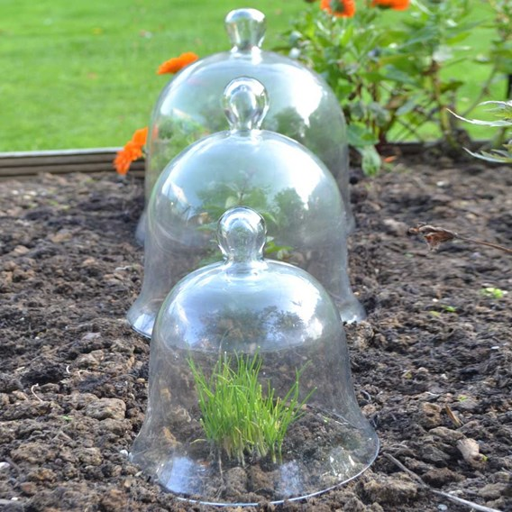Bell Glass Cloches