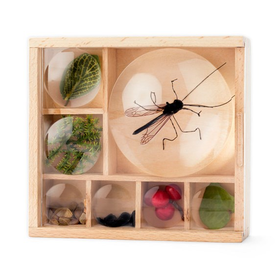 Bug Box / Dual Magnifier