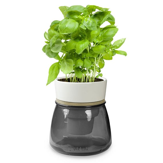 Self Watering Herb Pots