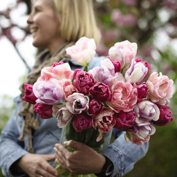 Tulip Bulbs - Florist's Treat Mixed