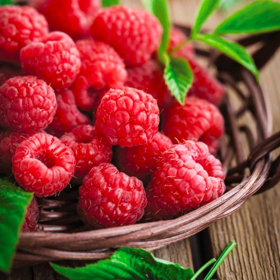 Raspberry (Rubus idaeus) Ruby Beauty
