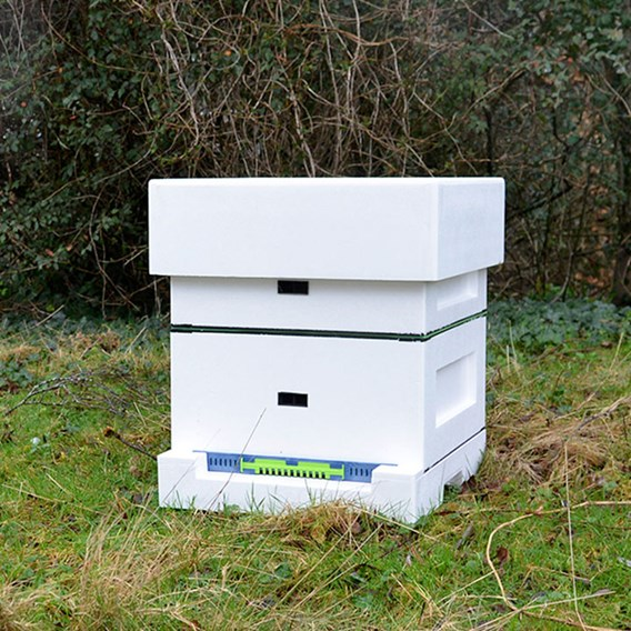 Poly Hive Starter Kit