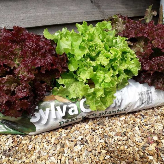 RHS SylvaGrow peat-free planter for organic growing (45 Litres)