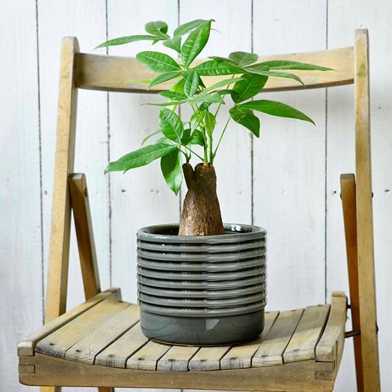 Oslo Planters - Grey