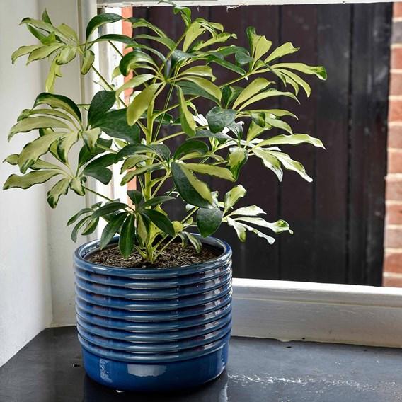 Oslo Planters - Blue