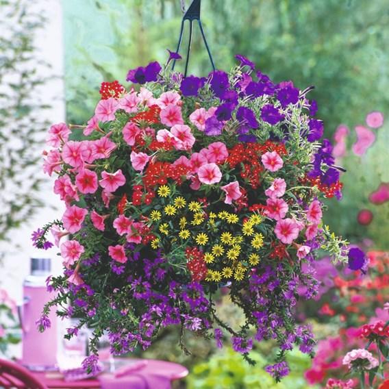 Bumper Basket Super Plug Plants - Collection