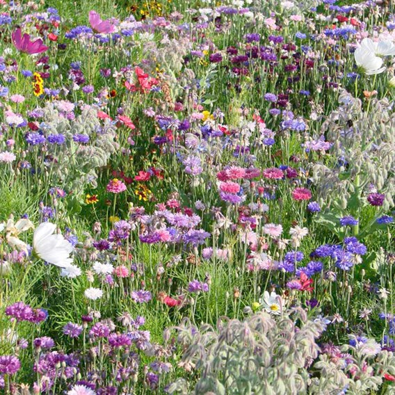 Flowering Mixture Seeds - Butterfly And Bee Mix