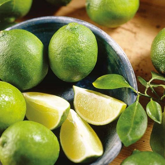 Citrus Tree - Lime