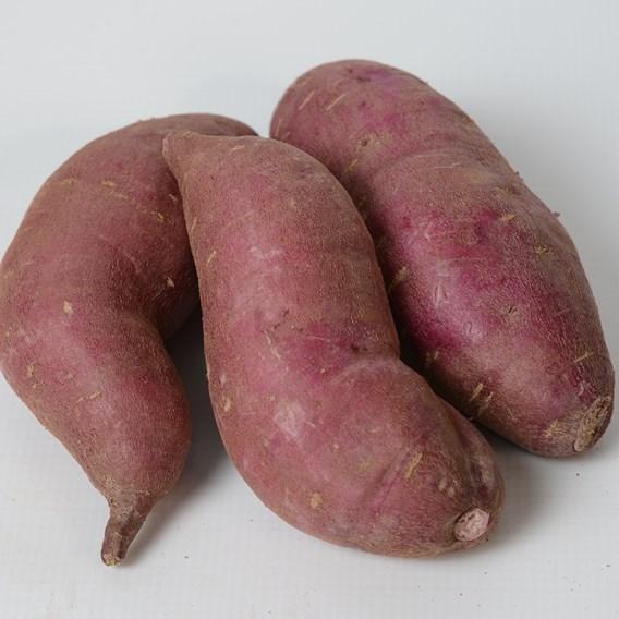 Sweet Potato Tahiti 10.5cm Pot x 1