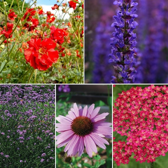 30 Perfect for Pollinators Perennial Collection