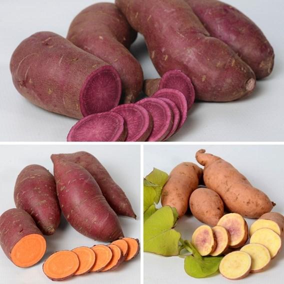 Sweet Potato Trio