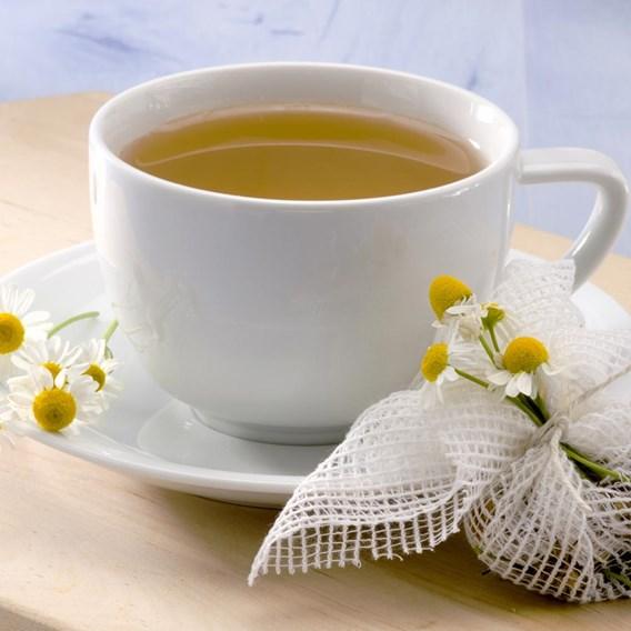 Herb Plant - Chamomile, Sweet