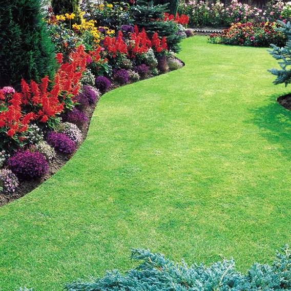 Premium lawn seed - 20kg