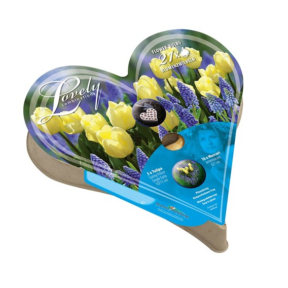 Plant-O-Tray Heart Preplanted Bulbs - Tulip & Muscari(21)
