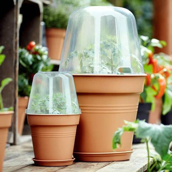 Terracotta Grow Pot + Bell Cover + Saucer