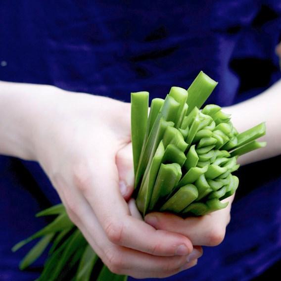 Edible Allium Seeds - Quattro F1