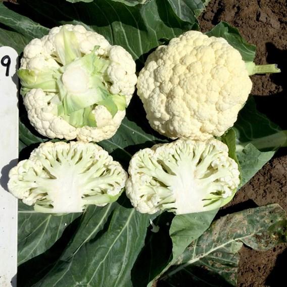Cauliflower seeds - Speed Star F1