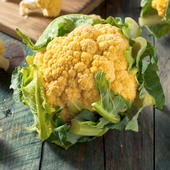Cauliflower - Cheddar F1