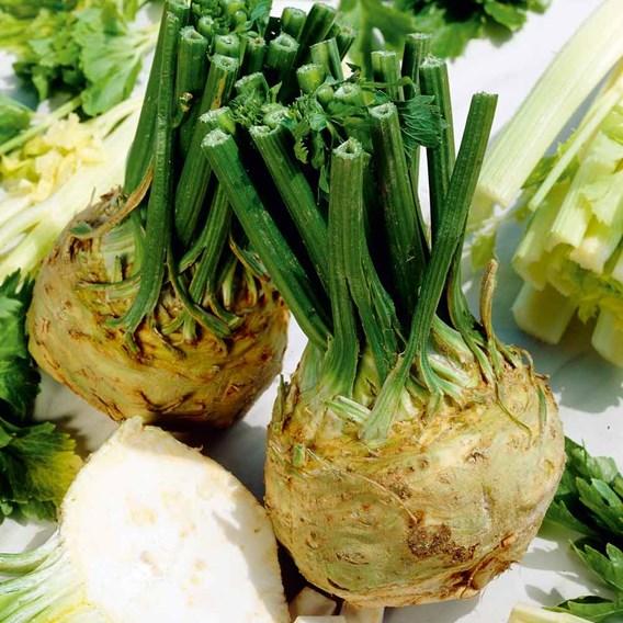 Celeriac Seeds - Brilliant