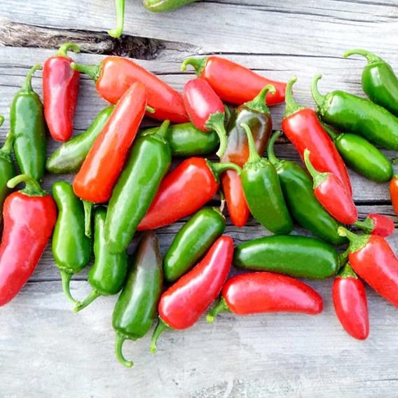 Pepper Chilli Plants - Jalapeno