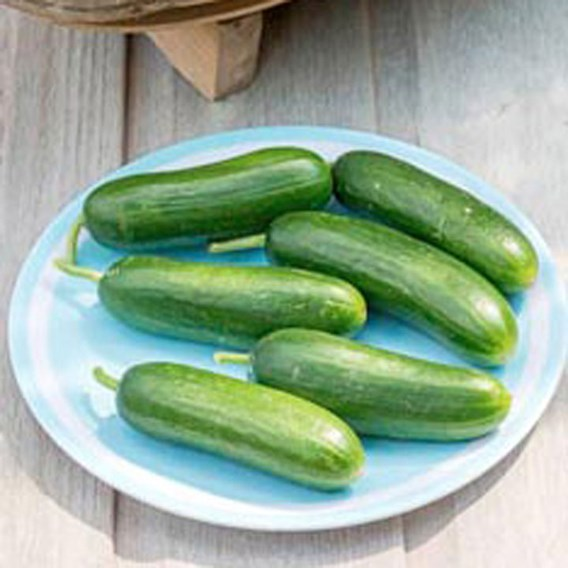 Cucumber Muncher