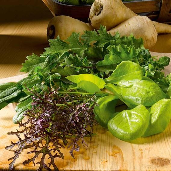 Leaf Salad Seeds - Winter Mix