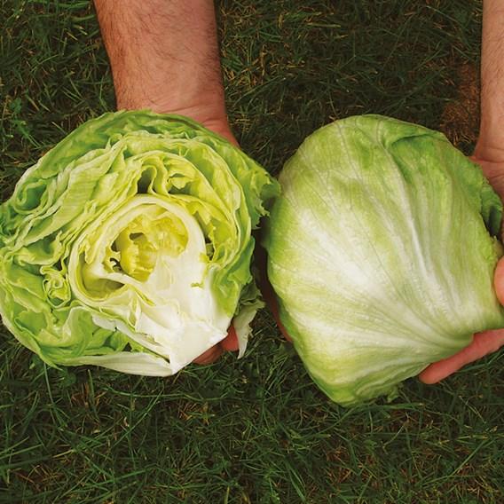 Lettuce Seeds - Robinson
