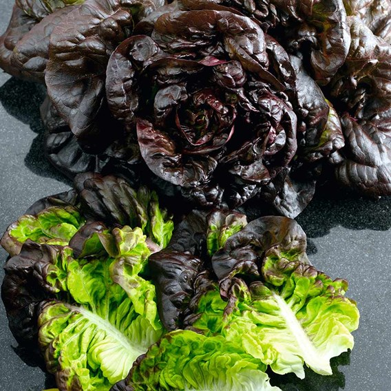 Lettuce Seeds - Red Little Gem Amaze -