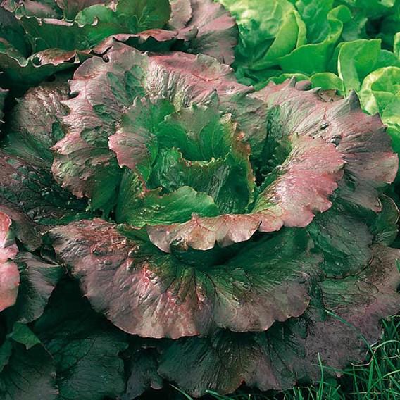 Lettuce Relay