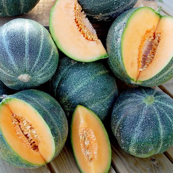 Melon Seeds - Petit Gris de Rennes