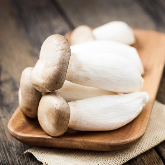 Mushrooms Mushroom Kit King Oyster (1)