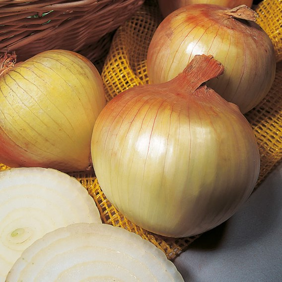 Onion Sets - Triple Pack