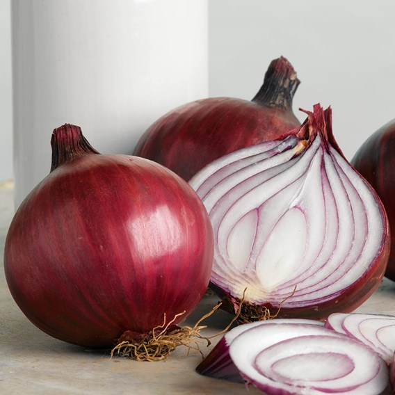 Onion Sets - Red Arrow