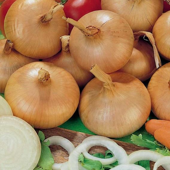Onion Sets - Stuttgarter