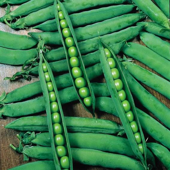 Pea Seeds - Hurst Greenshaft