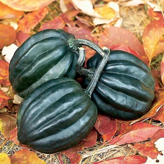 Squash & Pumpkin Tuffy