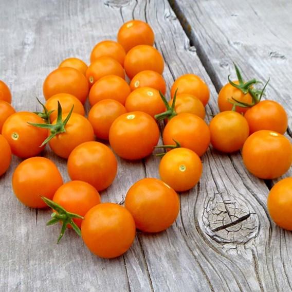 Tomato Seeds - Sungold F1