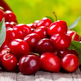 Patio Cherry Sylvia 9cm Pot x 1