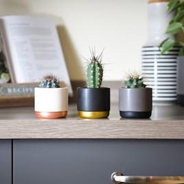 Nurserymans Choice House Plant Mix 5.5cm Pot x 1