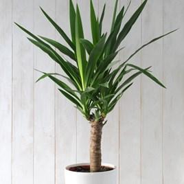 Plants & Plant Care