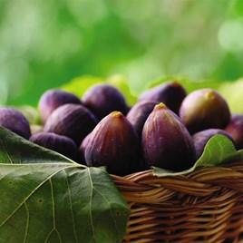Fig (Ficus) Negronne (Violette De Bourdea) 3L Pot x 1