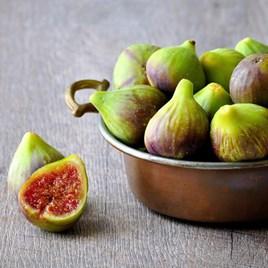 Fig (Ficus) Brunswick (bush) 3L Pot x 1