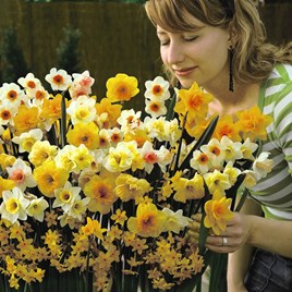 Daffodil Sweet Aroma Mixed